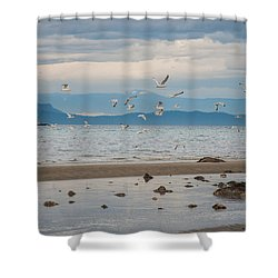 Herring Season  Shower Curtain
