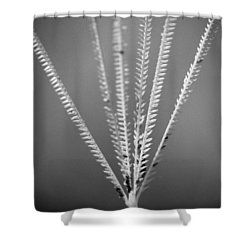 Loxahatchee Grass Shower Curtain by Bradley R Youngberg