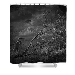 Loxahatchee Heron At Sunset Shower Curtain