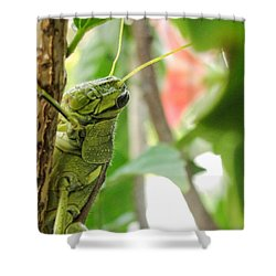 Lubber Grasshopper Shower Curtain by TK Goforth