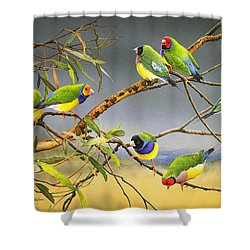 Lucky Seven - Gouldian Finches Shower Curtain