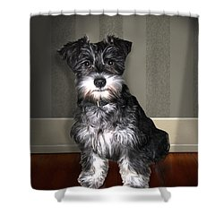 Lucy Lov'd Alot Shower Curtain by Tom Schmidt