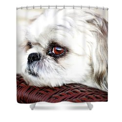 Lucy Shower Curtain by Molly McPherson