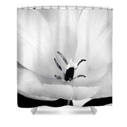 Luminance Shower Curtain