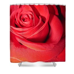 Luminous Red Rose 6 Shower Curtain