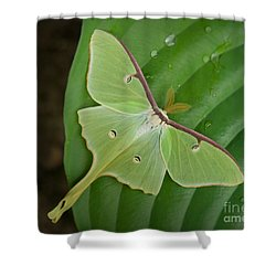 Shower Curtain featuring the photograph Luna Moth by Alana Ranney