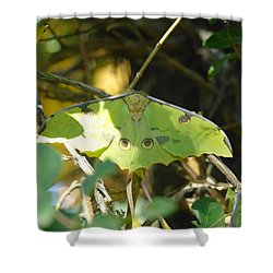 Luna Moth In The Sun Shower Curtain by Jeff Swan