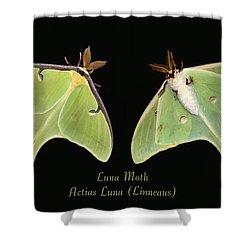 Luna Moth Shower Curtain by Kristin Elmquist