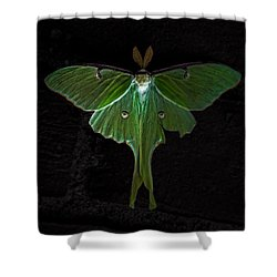 Lunar Moth Shower Curtain by Bob Orsillo