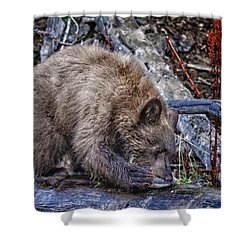 Shower Curtain featuring the photograph Lunch Break by Jim Thompson