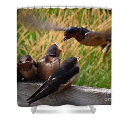 Lunch Is Served To The Fourth Baby Barn Swallow Shower Curtain by J McCombie
