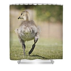 Lunch On The Run Shower Curtain by Priya Ghose
