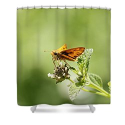 Lunch Time Shower Curtain by Amy Gallagher
