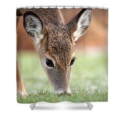 Lunch Time Shower Curtain by Karol Livote