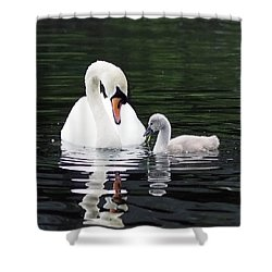 Lunchtime For Swan And Cygnet Shower Curtain by Rona Black