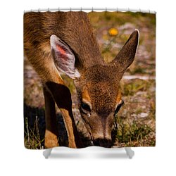 Lunchtime In The Forest Shower Curtain by Jordan Blackstone