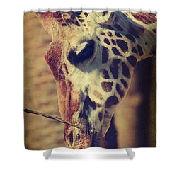 Lunchtime Twigs Shower Curtain by Laurie Search