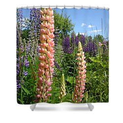 Shower Curtain featuring the photograph Lupin Summer by Martin Howard
