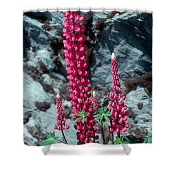 Lupine 1 Shower Curtain