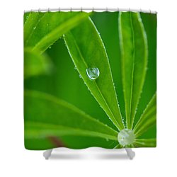 Lupine Dreams Shower Curtain