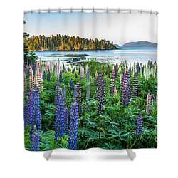 Lupine View 2 Shower Curtain