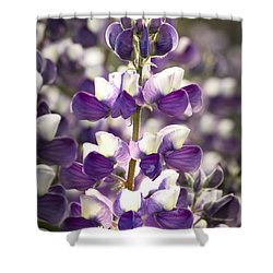 Shower Curtain featuring the photograph Lupine Wildflowers by Sonya Lang