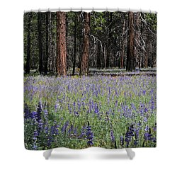 Lupines In Yosemite Valley Shower Curtain by Lynn Bauer