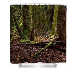 Lush Green Forest Shower Curtain by Mary Mikawoz