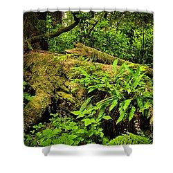 Lush Temperate Rainforest Shower Curtain by Elena Elisseeva