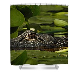 Lying In Wait Shower Curtain by Vivian Christopher