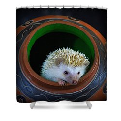 Lyla The Hedgehog Shower Curtain