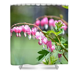 Lyre Flower  Shower Curtain by Sonali Gangane