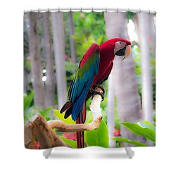 Shower Curtain featuring the photograph Macaw by Angela DeFrias
