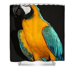 Macaw Hanging Out Shower Curtain