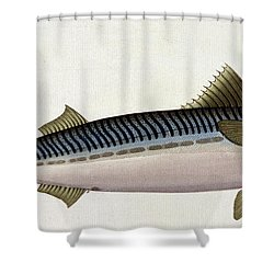 Mackerel Shower Curtain by Andreas Ludwig Kruger
