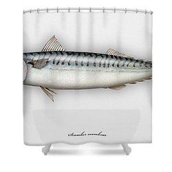 Mackerel Scomber Scombrus  - Maquereau - Caballa - Sarda - Scombro - Makrilli - Seafood Art Shower Curtain