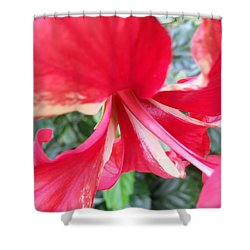 Macro Beauty Shower Curtain