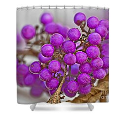 Shower Curtain featuring the photograph Macro Of Purple Beautyberries Callicarpa Plant Art Prints by Valerie Garner