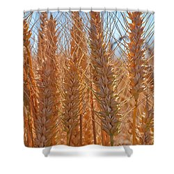 Shower Curtain featuring the photograph Macro Of Wheat Art Prints by Valerie Garner