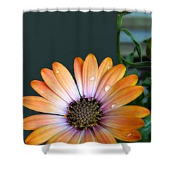 Macro Orange And Yellow Daisies With Water Droplets Shower Curtain by Danielle  Parent