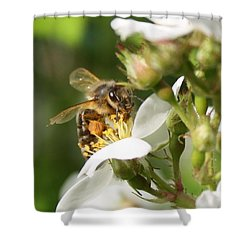 Mad Honeybee Shower Curtain by Lucinda VanVleck