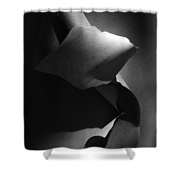 Madrona Bark Black And White Shower Curtain
