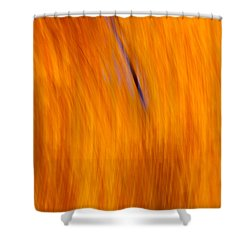 Shower Curtain featuring the photograph Maelstrom Of Fall Colors by Jeff Folger