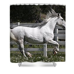 Maestoso Aurorra Shower Curtain by Wes and Dotty Weber