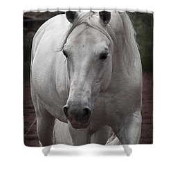 Maestoso II Ambrosia Shower Curtain by Wes and Dotty Weber