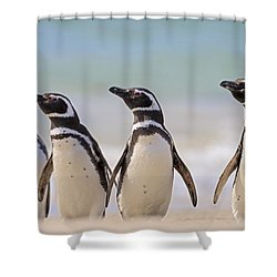 Magellanic Penguins Carcass Island Shower Curtain by Heike Odermatt