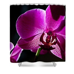 Magenta Orchid Shower Curtain
