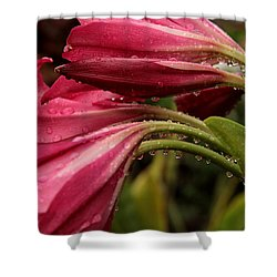 Magenta Rain Shower Curtain