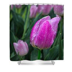 Magenta Tulip In Rain At Brandenburg Shower Curtain