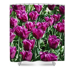 Shower Curtain featuring the photograph Magenta Tulips by Allen Beatty